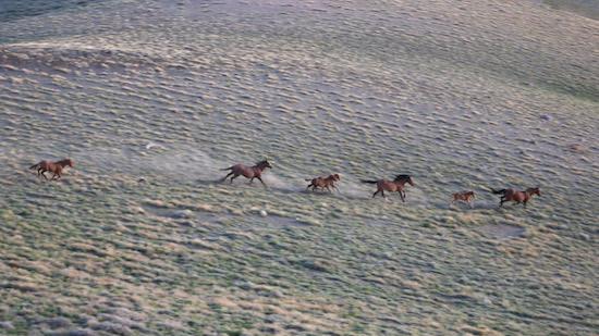 Great Basin horses - Scotty Strachan